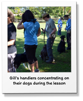 Gill's handlers concentrating on their dogs during the lesson